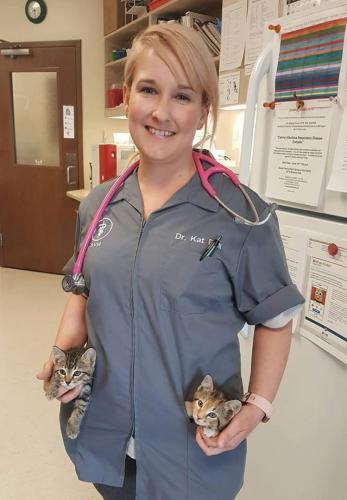 drbell-kittens  full