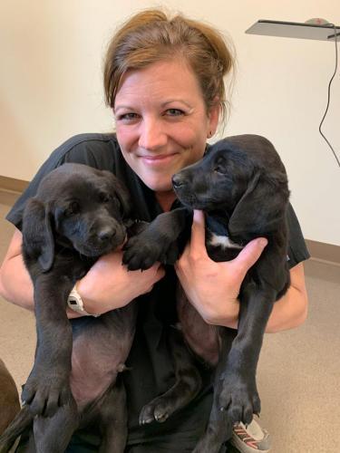 ZJill-O-and-black-lab-pups
